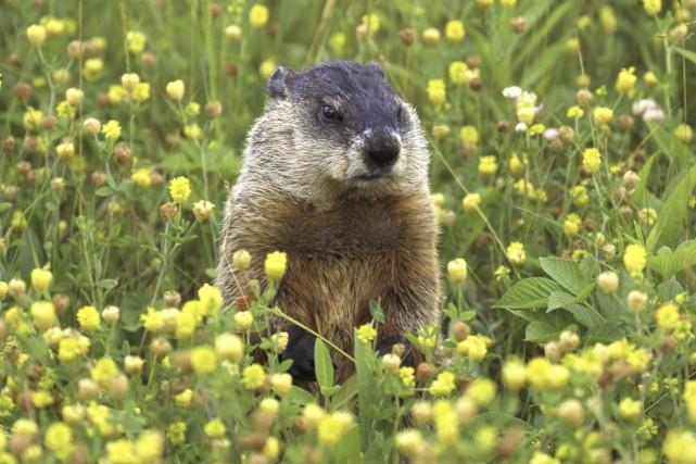 trou dans la pelouse quel animal