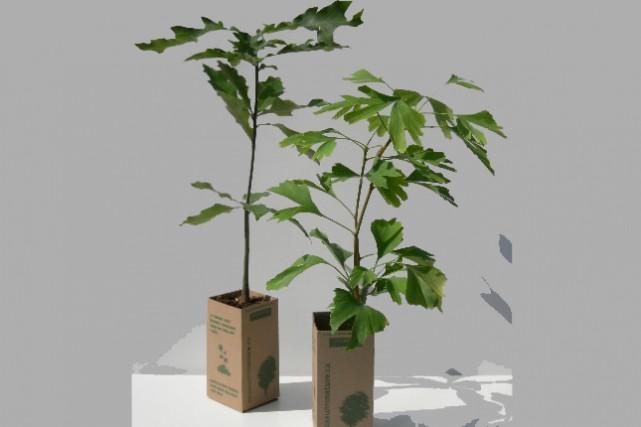 Cadeaux d 39 automne rustiques rares et abordables for Boutique jardin botanique