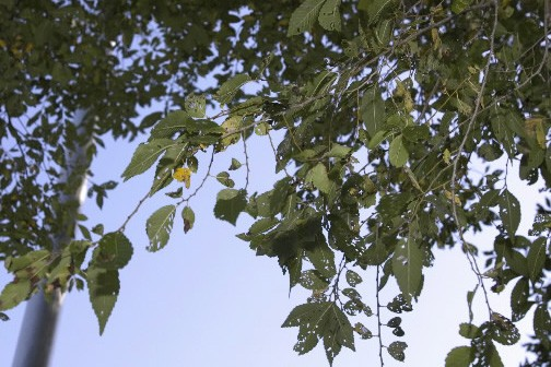 Le bon arbre au bon endroit carole thibaudeau conseils - Distance plantation arbre maison ...