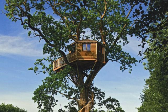 Des h tels dans les arbres partout dans le monde nouvelles for La plus grande cabane du monde