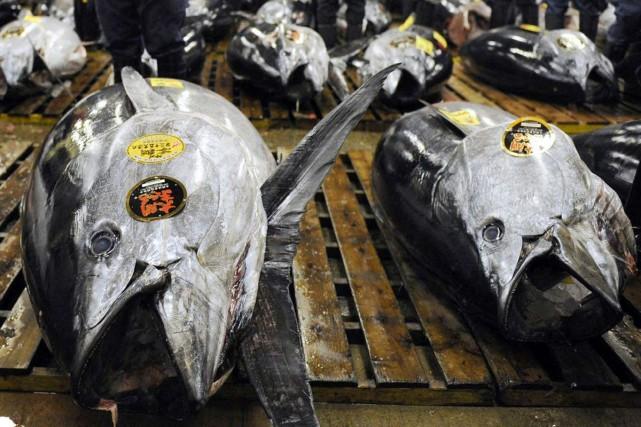 D'immenses thons ont été vendus aux enchères au... (Photo AFP)