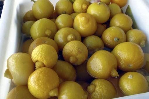 Les citrons confits sont utilisés comme ingrédient dans... (Photo: Éric Cléement, La Presse)