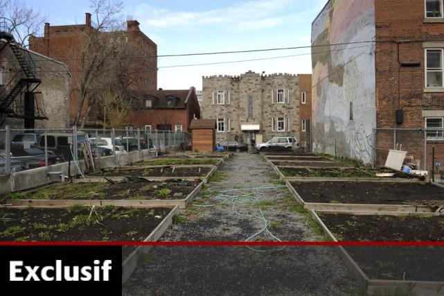 Le terrain qui accueille ce petit jardin communautaire,... (Photo: Bernard Brault, La Presse)