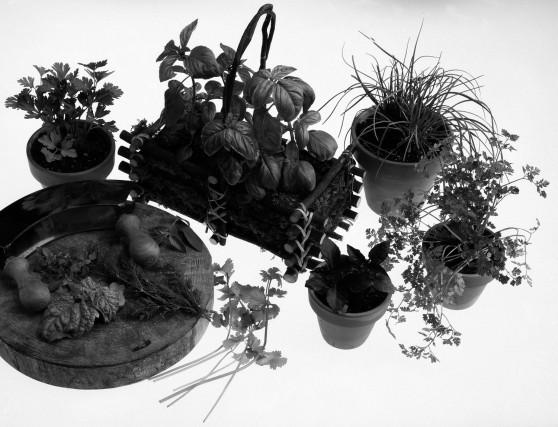 Au jardin des d lices horticulture for Au jardin des delices