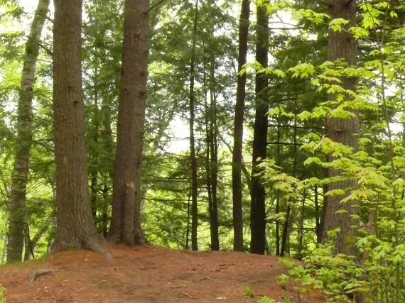Alors que les statistiques confirment le recul des forêts autour de Montréal,...