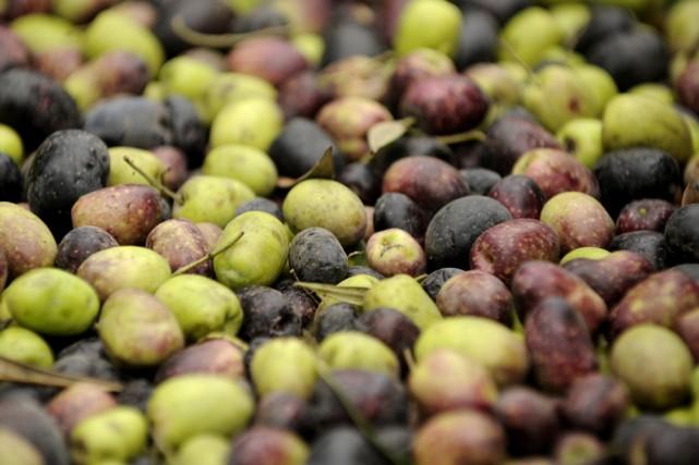 Nous commençons ce dossier huiles d'olive avec une proposition toute simple:... (Photo: Bernard Brault, La Presse)
