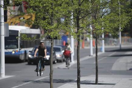 Des arbres qui seront coupés aux coins Maisonneuve... (Photo Martin Chamberland, La Presse)