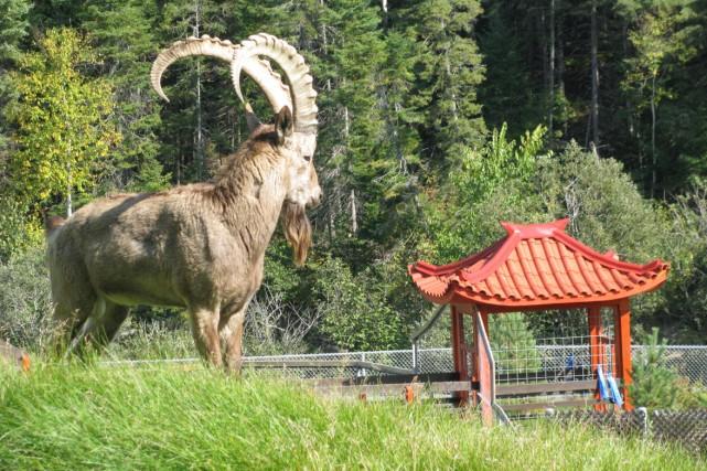 Super Zoo sauvage de Saint-Félicien: la Mongolie | Stéphanie Morin | Québec SM38