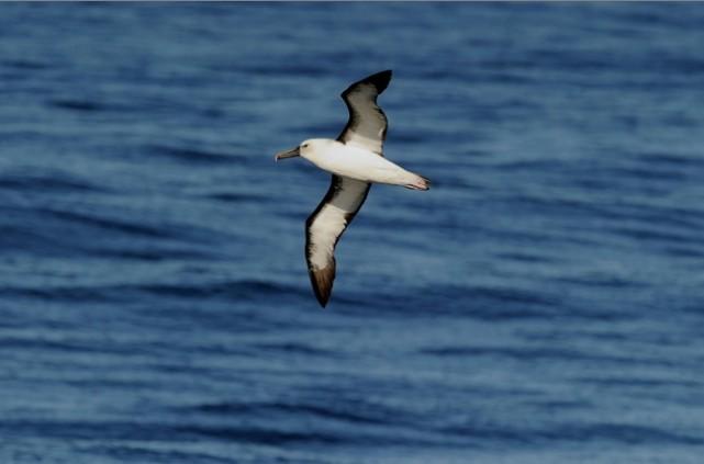 Soumis à une série de pressions, du réchauffement à la surpêche, les océans... (Photo AFP)