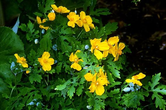 Vos questions en vedette larry hodgson collaboration sp ciale horticulture - Plante qui aime le soleil ...
