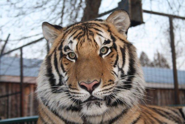 Le tigre Jonas et deux dromadaires manquent à...
