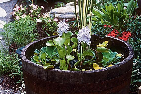 Bassin d 39 eau miniature beau facile et bon march larry hodgson collaboration sp ciale - Bassin d eau jardin ...