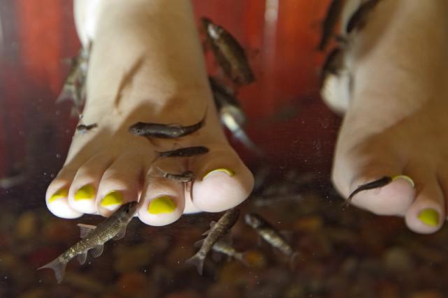 Mme Ngoc Tram fait une séance de piscipédicure,... (Photo: Alain Roberge, La Presse)