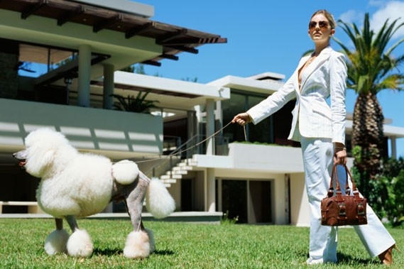 h tels de luxe pour chiens nouvelles. Black Bedroom Furniture Sets. Home Design Ideas