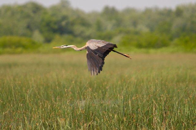 Parmi les 400 espèces d'oiseaux qui fréquentent le... (Photo: Philippe Manning, pour le Biophare)