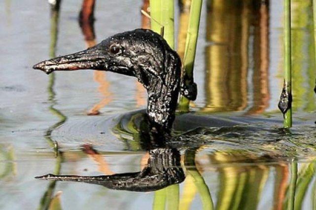Les oiseaux sont 30 fois plus nombreux à... (Photo: Archives PC)