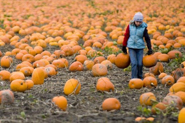 Assez Le temps des récoltes | Martine Bouliane, collaboration spéciale  FH56