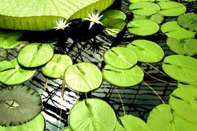 Une plante sur cinq dans le monde est menacée de disparition, et l'homme est... (Photo: Reuters)