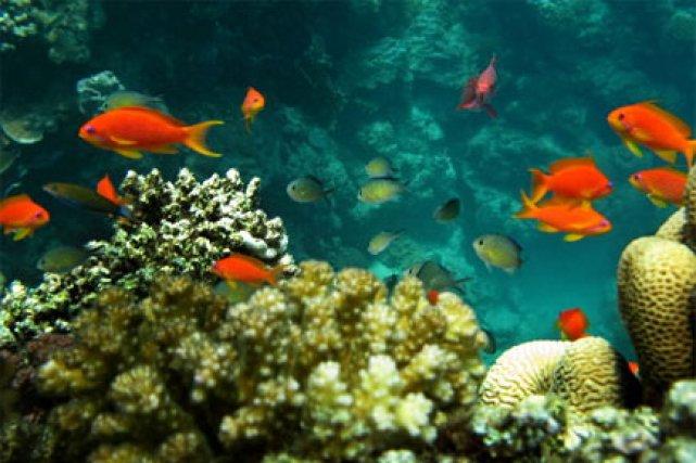 Les polluants chimiques rejetés dans l'océan menacent de... (Photo: AFP)