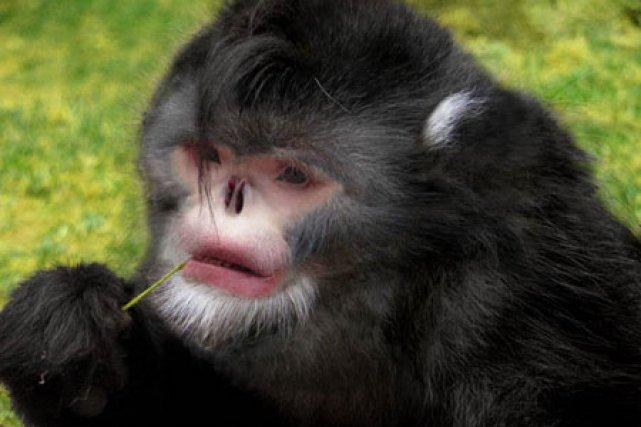Si cette nouvelle espèce était inconnue des scientifiques,... (Photo: AFP)
