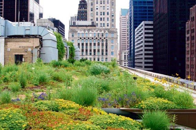 les toits verts une plus value pour les citadins lise. Black Bedroom Furniture Sets. Home Design Ideas