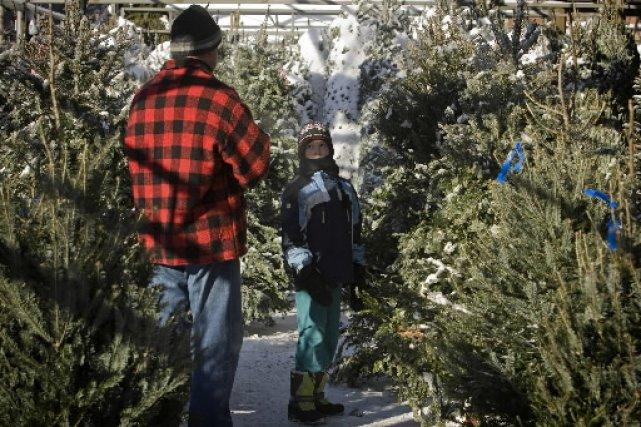 L'affaire est entendue: le sapin de Noël naturel est plus écologique que  son... (Photo: David Boily, archives La Presse)