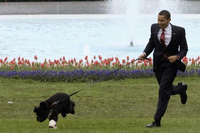 barack obama affirme qu 39 il ramasse lui m me les crottes de son chien insolite. Black Bedroom Furniture Sets. Home Design Ideas