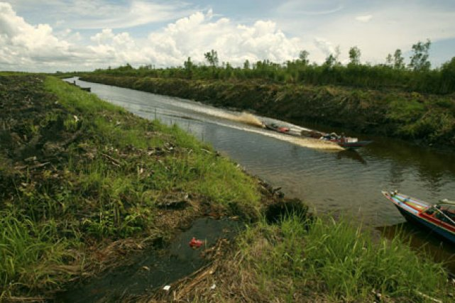 La province de Kalimantan Centre est l'une des... (Photo: Reuters)