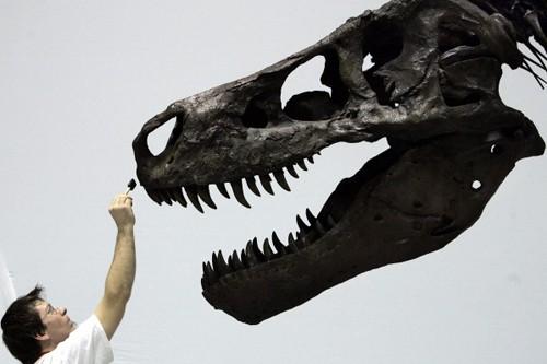 Les chercheurs ont évalué à 3600kg la force... (Photo: Archives AFP)
