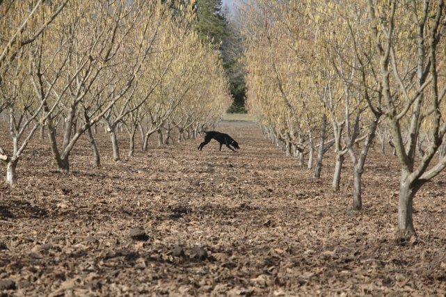 Quand on pense truffe, on pense d'abord à l'or noir du Périgord ou aux  joyaux... (Photo: fournie par Truffletree.com)