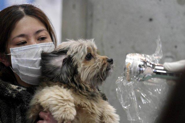 Un expert évalue le degré de radioactivité d'un... (Photo: AFP)