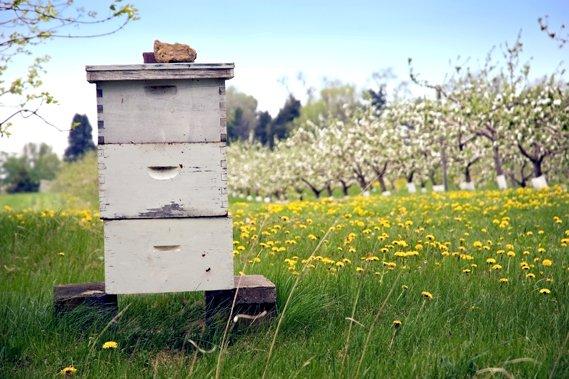 Les apiculteurs essuient des pertes anormales depuis quelques... (Photothèque Le Soleil)