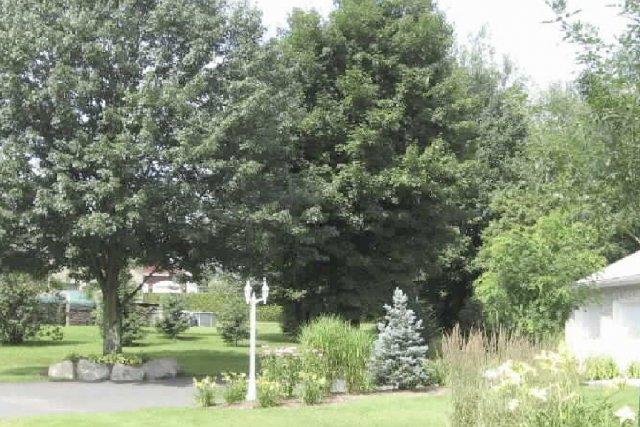 L'îlot avec arbre comporte pour environ 650 $... (Photo fournie par les Paysages Verduroy)