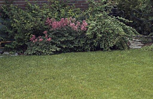 Pour une belle pelouse sans pesticides sherbrooke - Comment avoir une belle pelouse ...