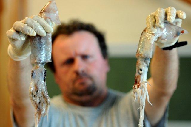Manger des poissons laids pour sauver les esp ces en p ril for Manger pour poisson