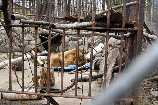 Les trois ours Mary, Kody et Toupie sont... (Photo fournie par Patricia Tulasne)