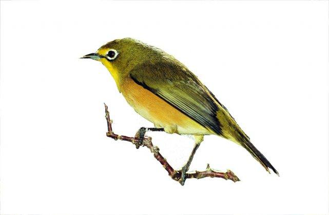 Comment attirer les oiseaux au jardin horticulture - Comment effrayer les oiseaux ...