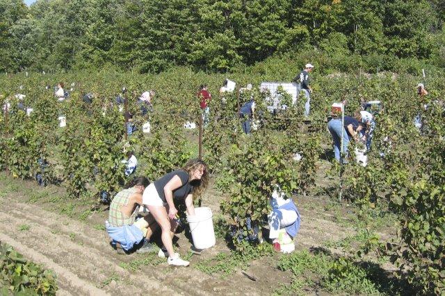 Vignoble de la Rivière du Chêne, à Saint-Eustache... (Photo: fournie par le Vigoble de la Rivière du Chêne)