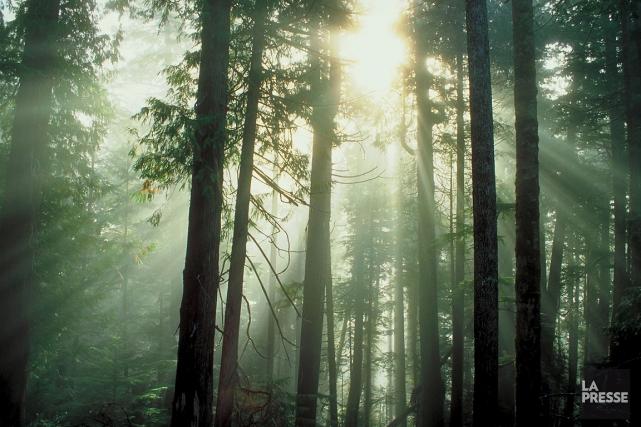 Malgré des difficultés économiques importantes, le secteur forestier... (Photothèque La Presse)
