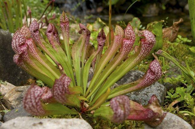 plante carnivore a vendre montreal
