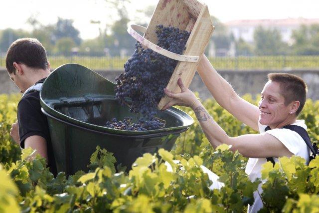 Vendanges dans un vignoble de Bordeaux.... (Photo: AFP)