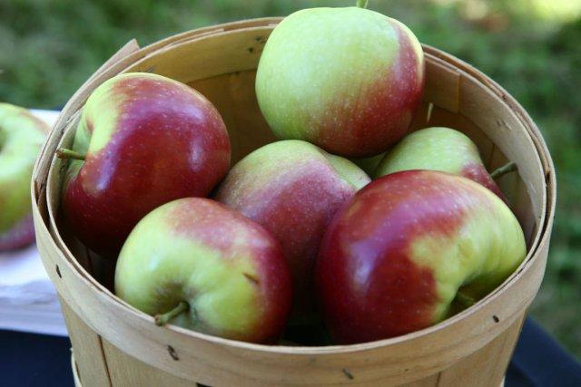 Les Américains seront très bientôt appelés à se prononcer sur la pomme... (Photo: archives La Voix de l'Est)