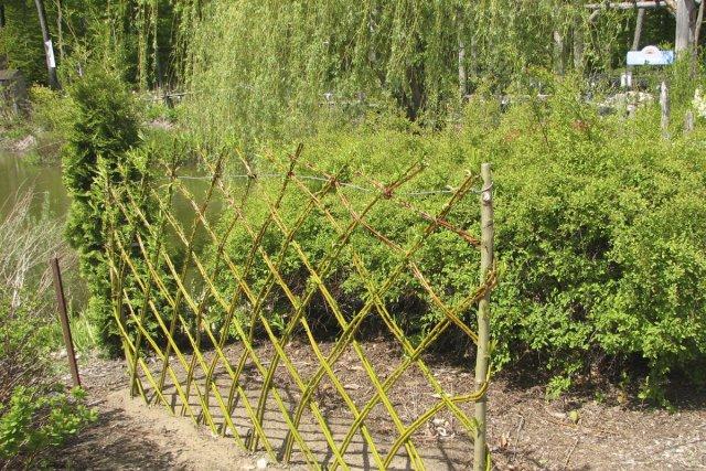 Cl tures vivantes pierre gingras jardiner for Tige de bois pour decoration