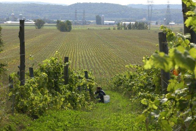 Le gel du dézonage du territoire agricole semble... (Photo: archives La Presse)