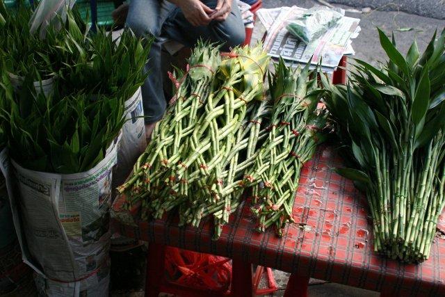 Le lucky bamboo n'est pas un véritable bambou,... (Photo www.jardinierparesseux.com)