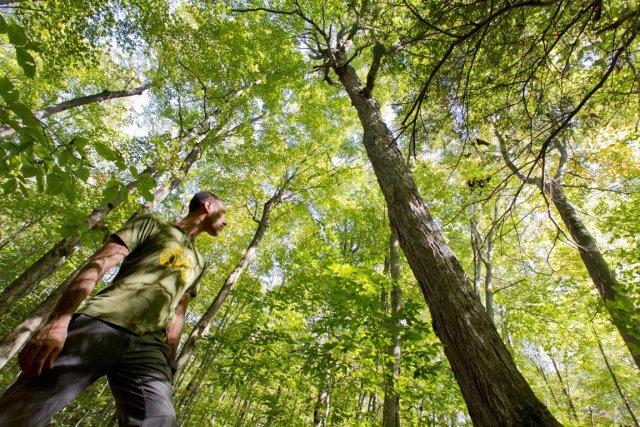 Trois groupes écologistes estiment qu'il ne faut pas... (Photo: Ivanoh Dermers, La Presse)