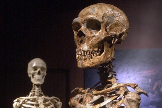 L'homme du Néandertal est disparu depuis près de... (PHOTO ARCHIVES ASSOCIATED PRESS)