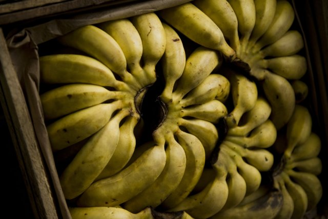 La Colombie et l'Équateur sont les plus gros... (Photo Ernesto Benavides, archives AFP)