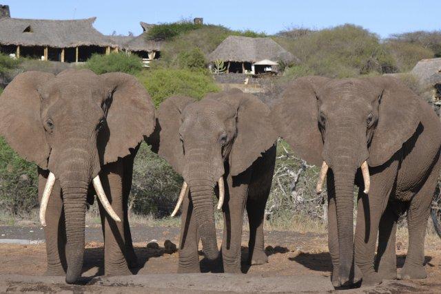 Des voyages d'exception sont offerts au Kenya pour... (Photo: Raymond Gervais)
