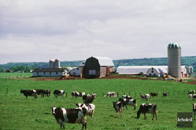 Les politiques agricoles de la province risquent de... (PHOTO ARCHIVES, LE SOLEIL)